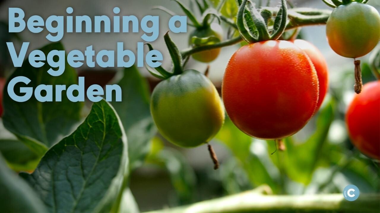 How To Start A Beginner Vegetable Garden From Scratch Better
