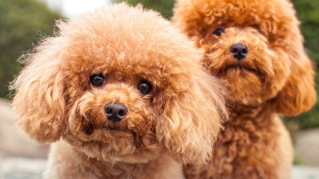 15 Hypoallergenic Dogs And Cats Health