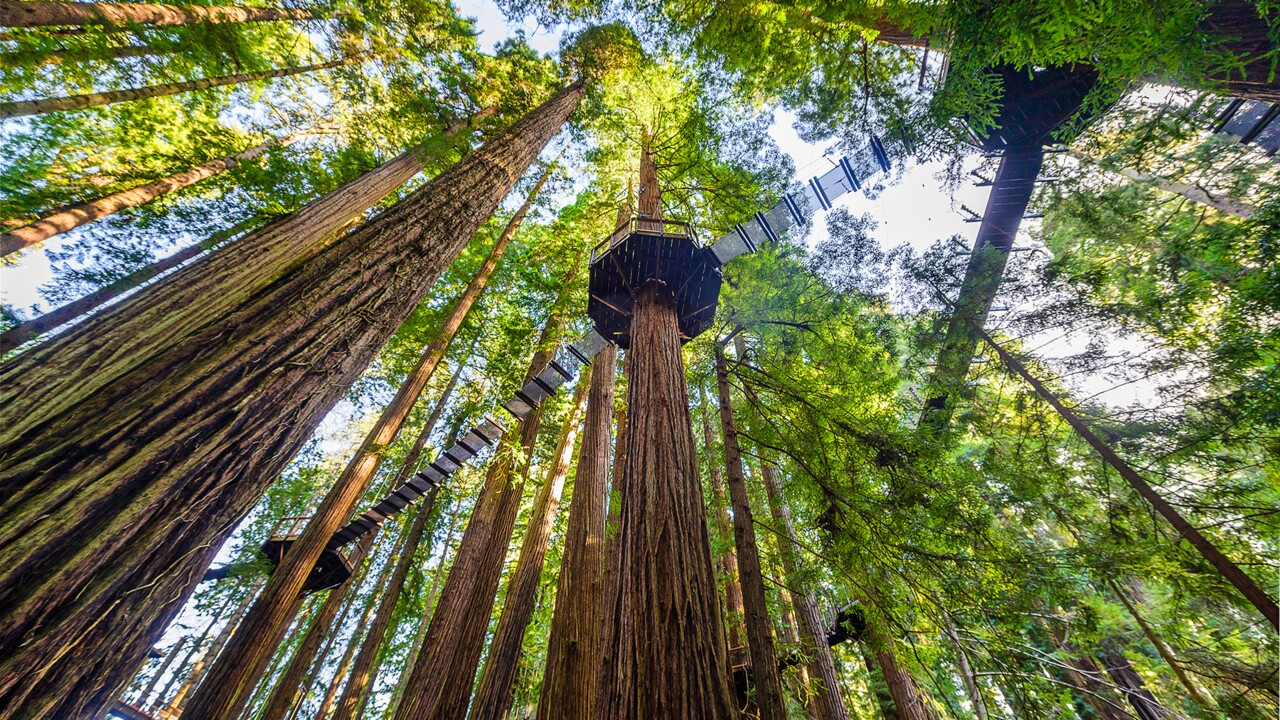You Can Walk Among California S Redwood Trees 100 Feet In The Air Travel Leisure