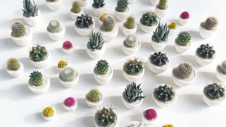 Mini Succulents Are The Cutest Houseplants Better Homes Gardens