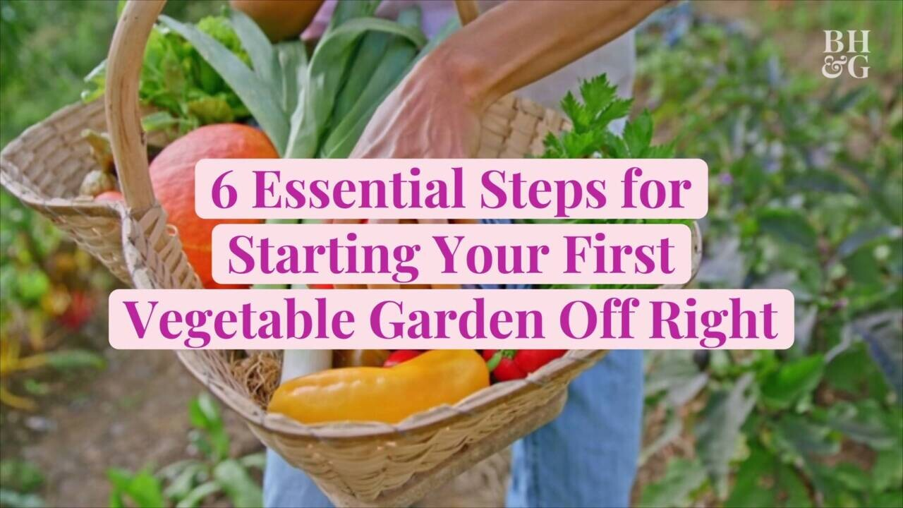 How To Start A Beginner Vegetable Garden From Scratch Better Homes Gardens