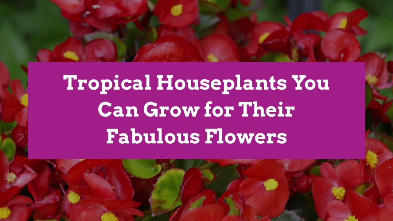 11 Tropical Flowering Plants For The Home Better Homes Gardens