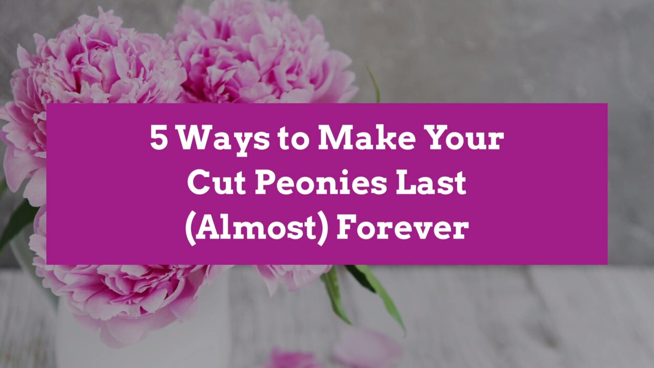 How To Keep Cut Peonies Fresh Better