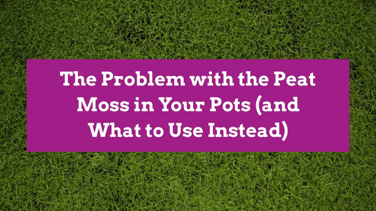 The Problem With The Peat Moss In Your Pots And What To Use