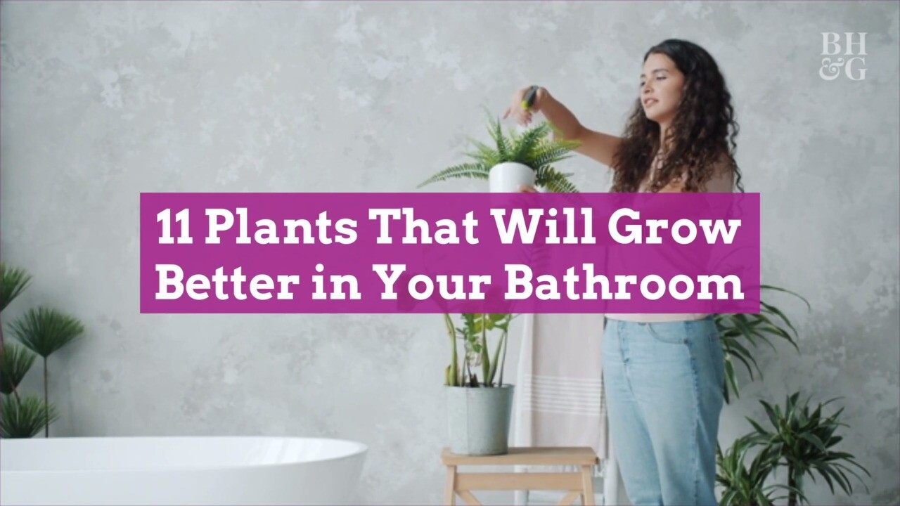 20 Plants That Will Grow Better in Your Bathroom