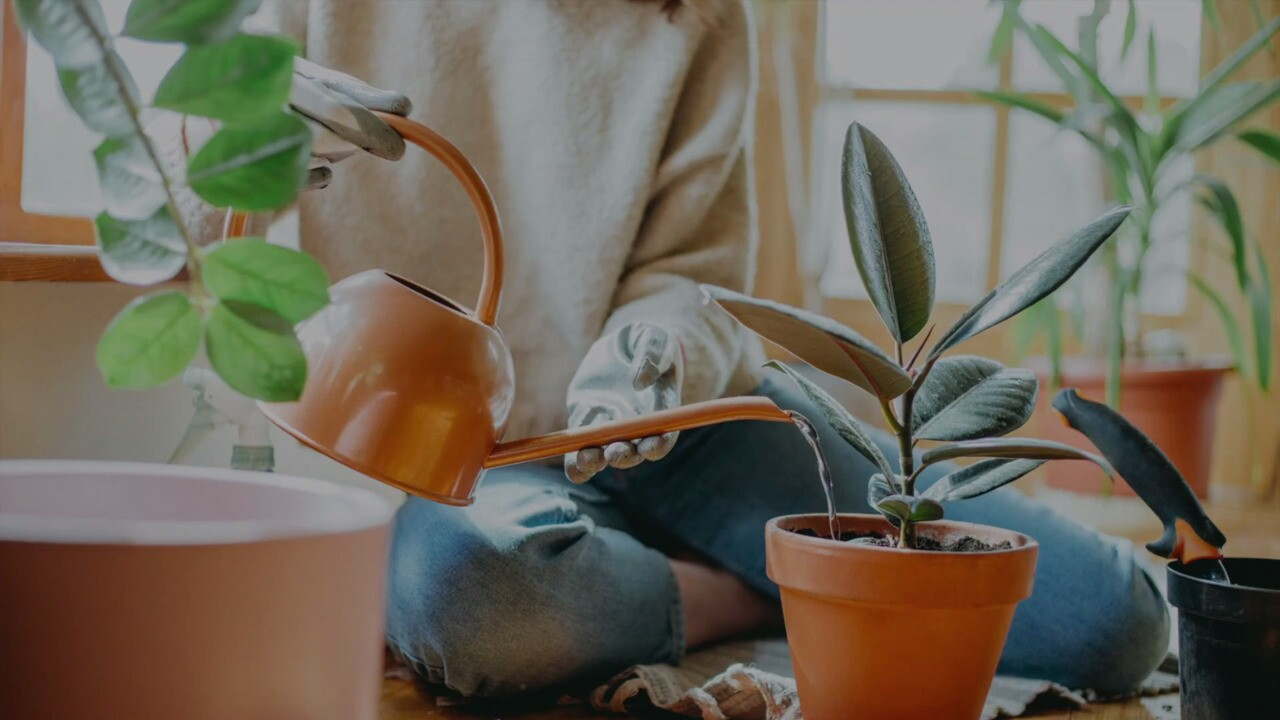 How To Water Houseplants And