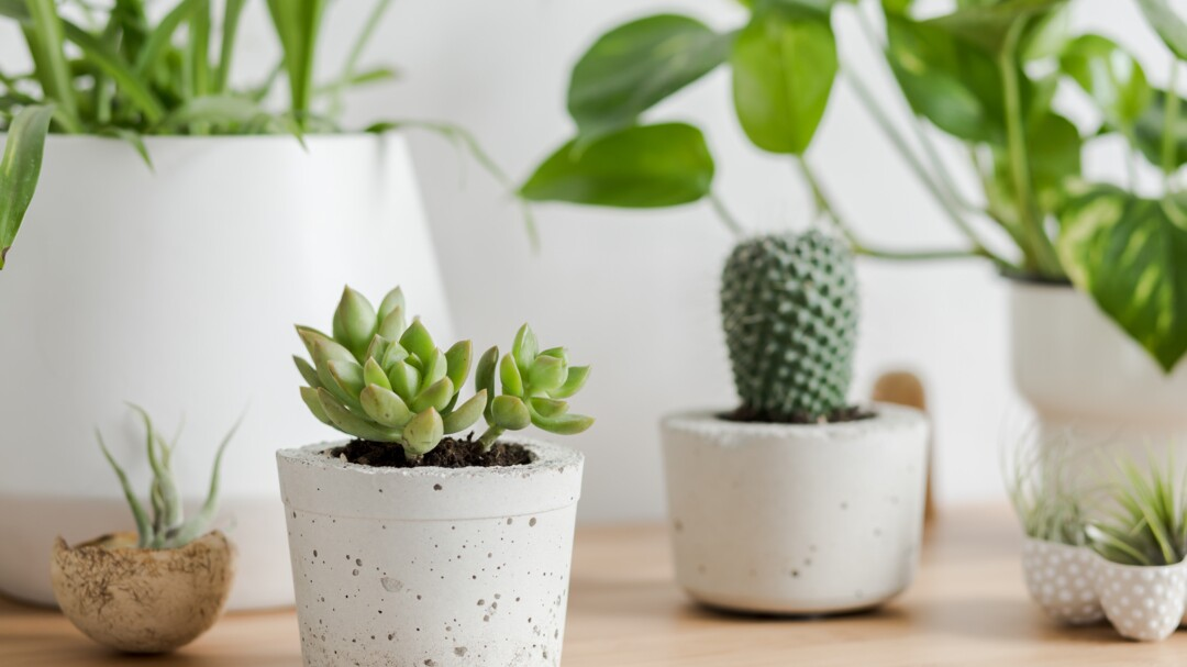 Best Succulents To Grow Indoors Better Homes Gardens