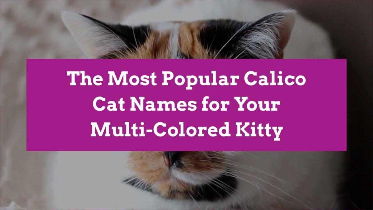 50 Creative Calico Cat Names Better Homes Gardens