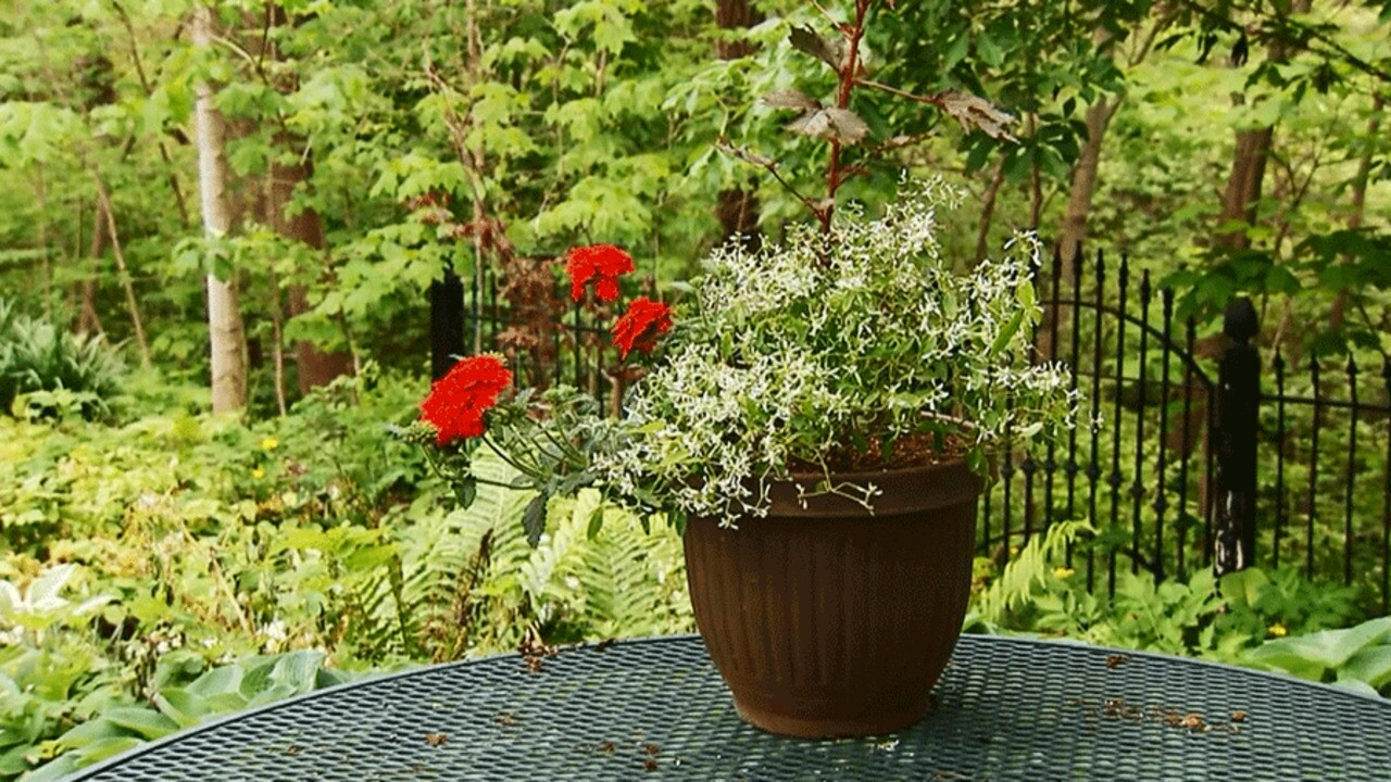 A Gallery Of Beautiful Container Garden Ideas Better Homes Gardens