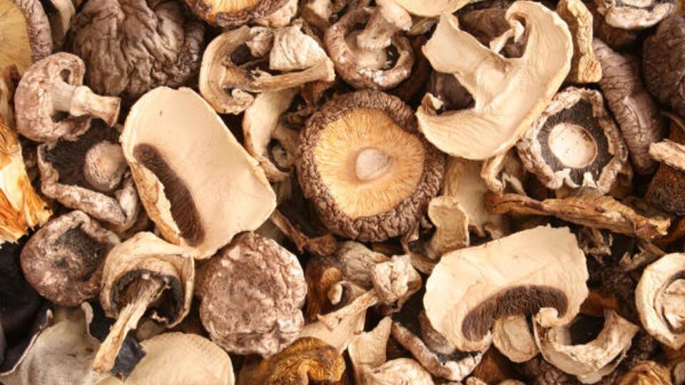 buy dried mushrooms