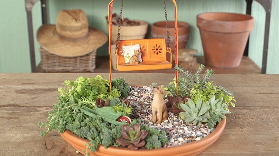 Adorable Tabletop Mini Succulent Garden Better Homes Gardens