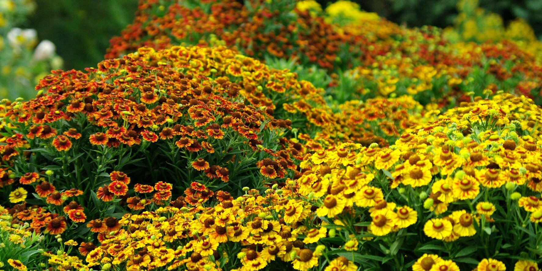 27 Fall Plants From Flowers To Trees For Bright Autumn Color Southern Living