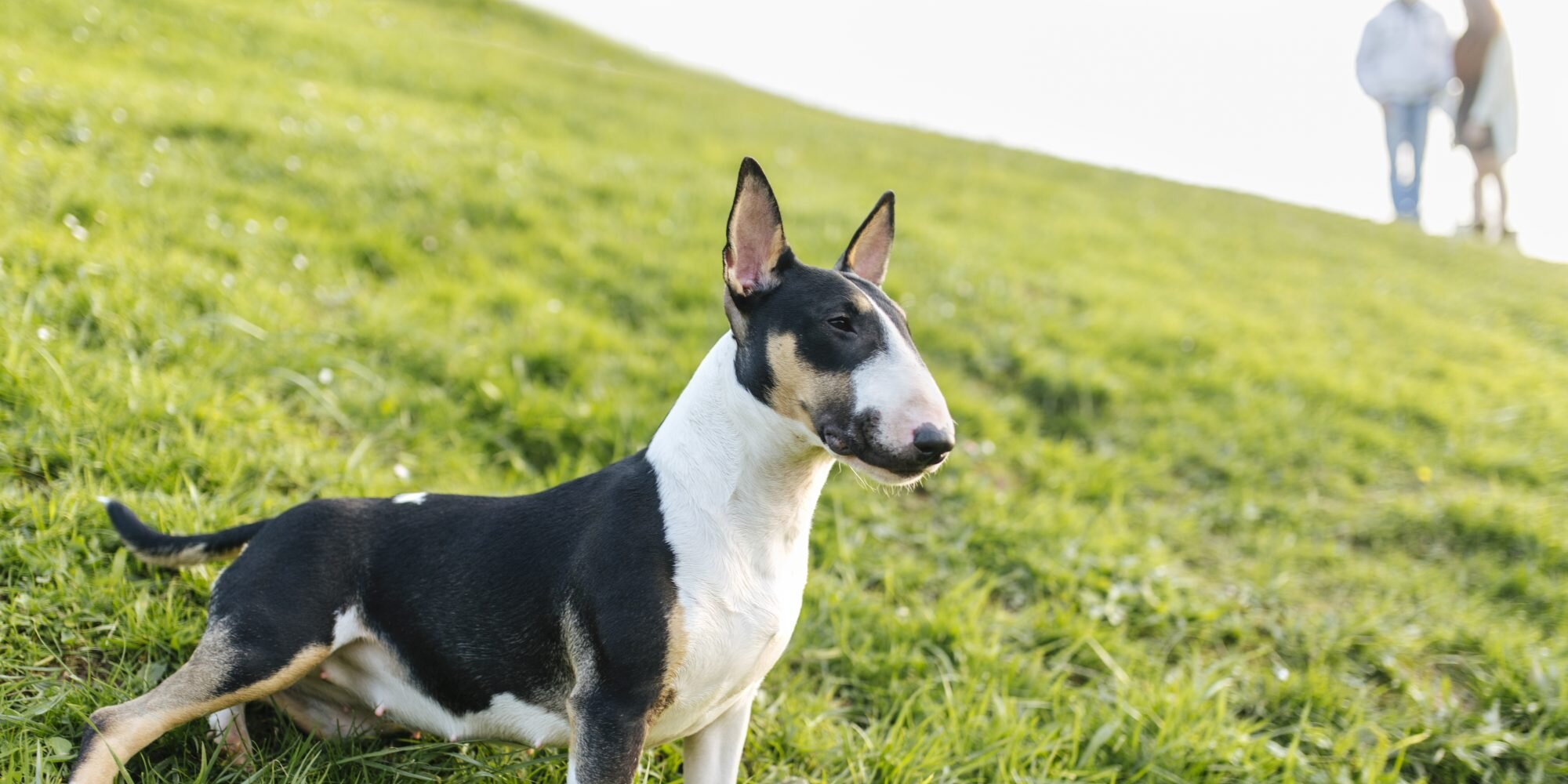 Trancing: What Is It and Why Does Your Dog Do It?
