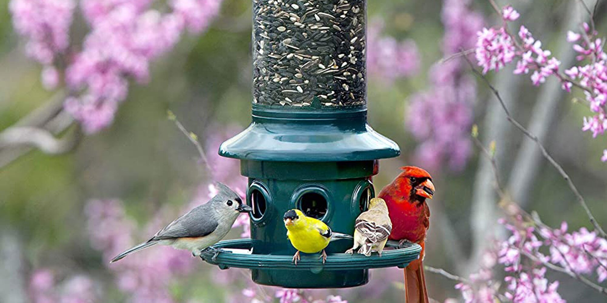 The 11 Best Bird Feeders to Add to Your Yard This Summer