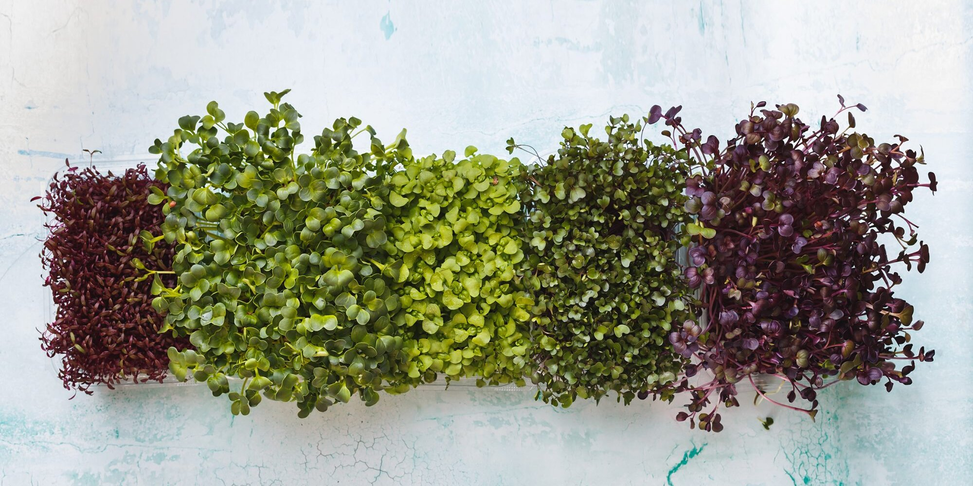 Vertical Farming Is a Space-Saving Way to Grow Fruits and Vegetables at Home—Here's How