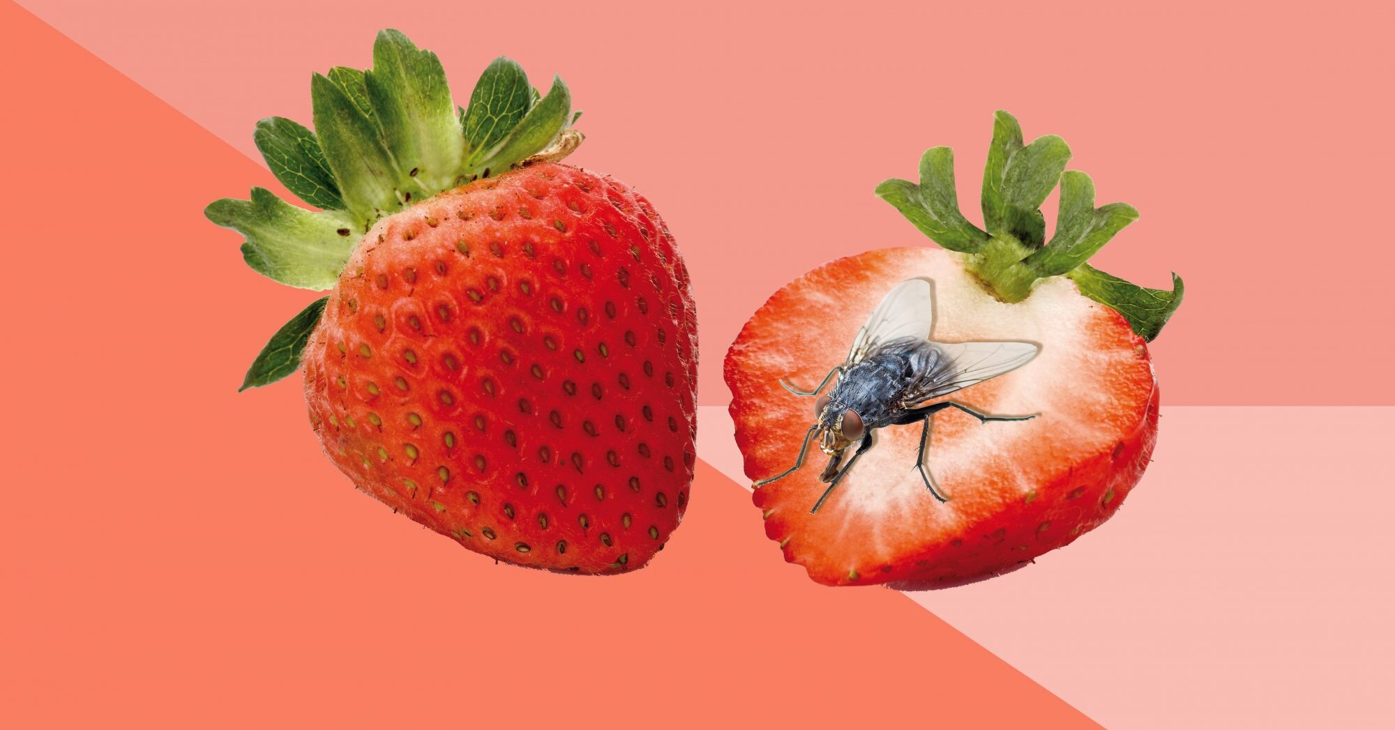 How To Get Rid Of Fruit Flies For Good Real Simple