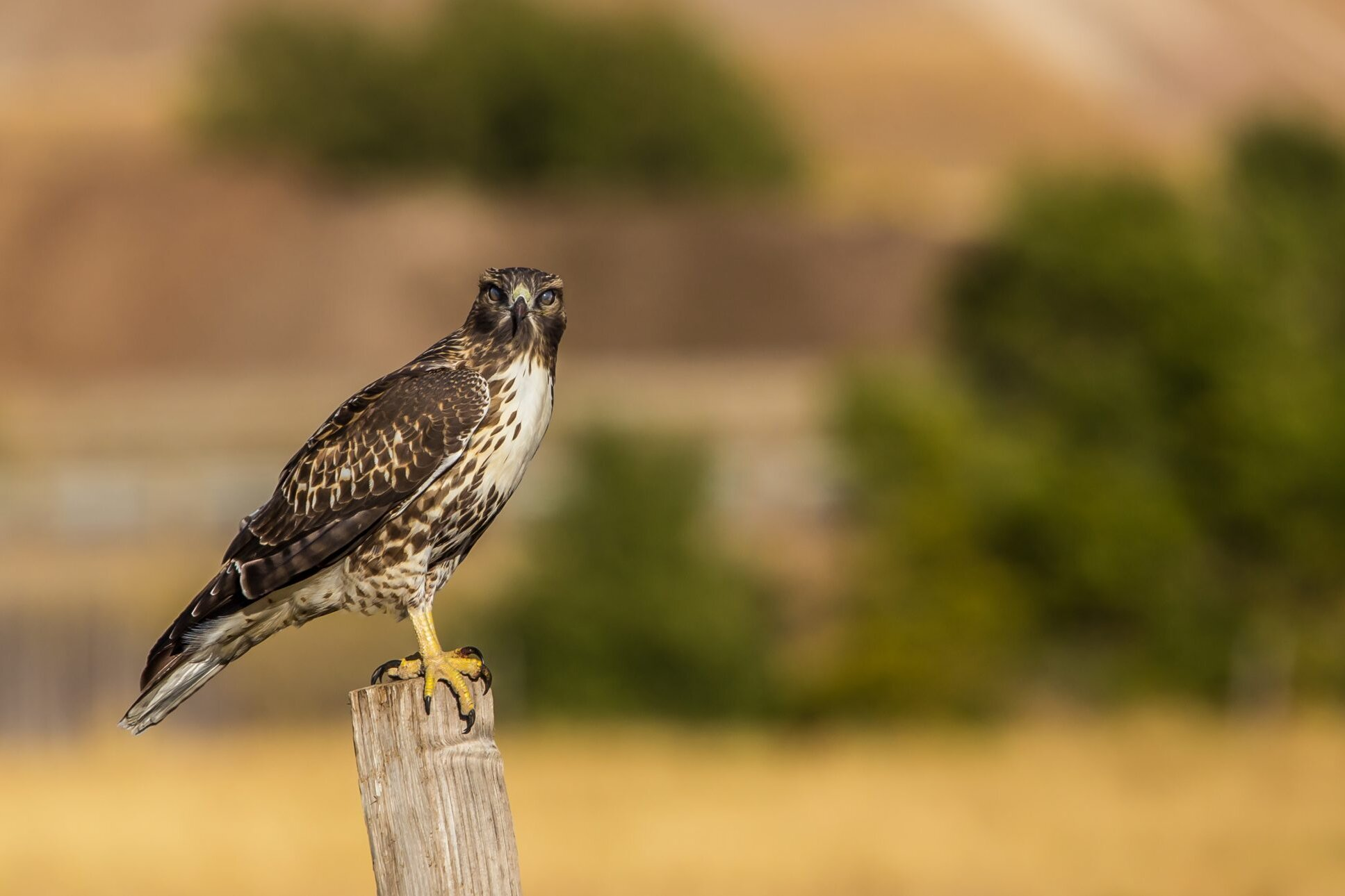 Birds Of Prey You Ll Find In The South Southern Living