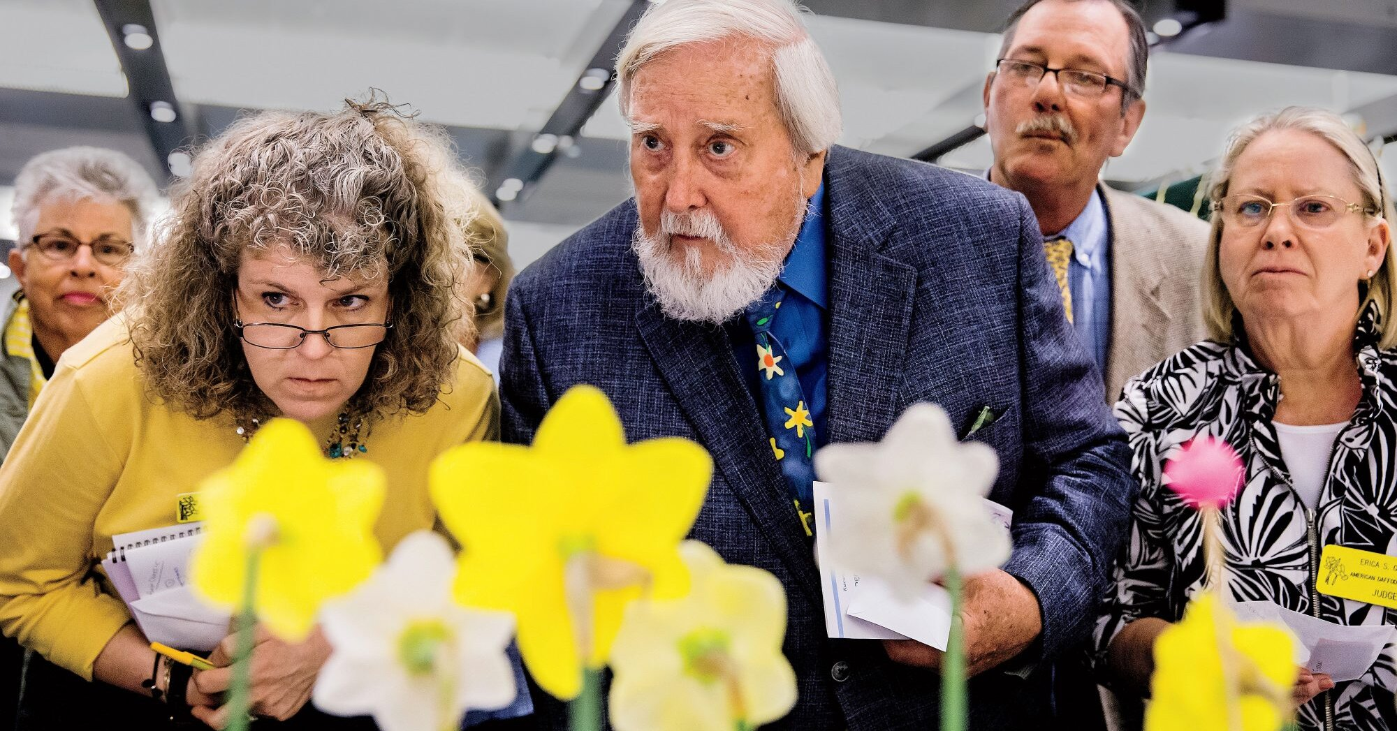 Secrets From a Competitive Southern Daffodil Exhibition
