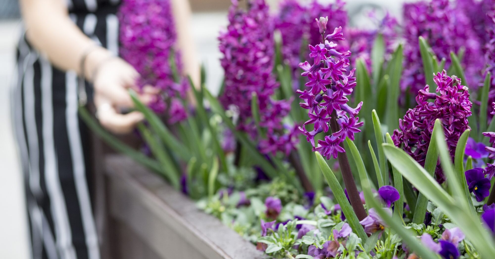 Pretty Purple Flowers To Plant In Your Garden Southern Living