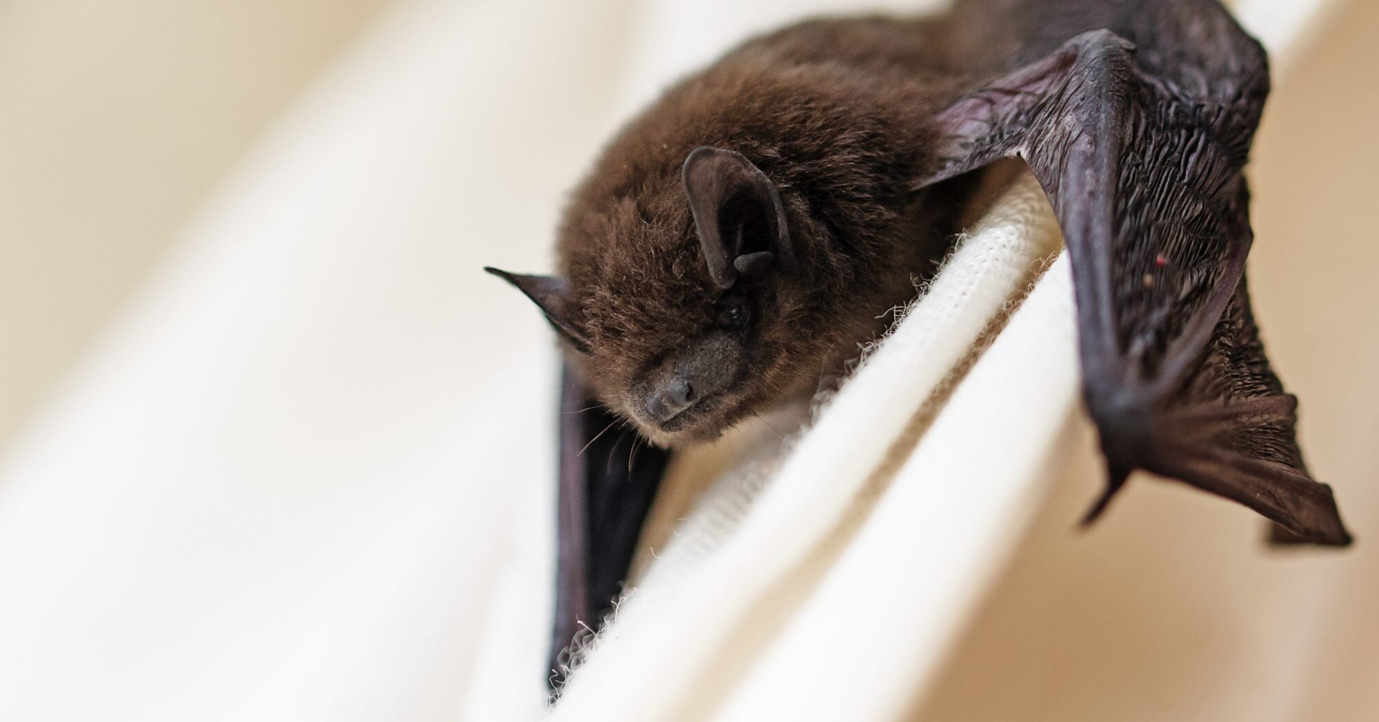 How To Get Rid Of Bats In Your Home Martha Stewart