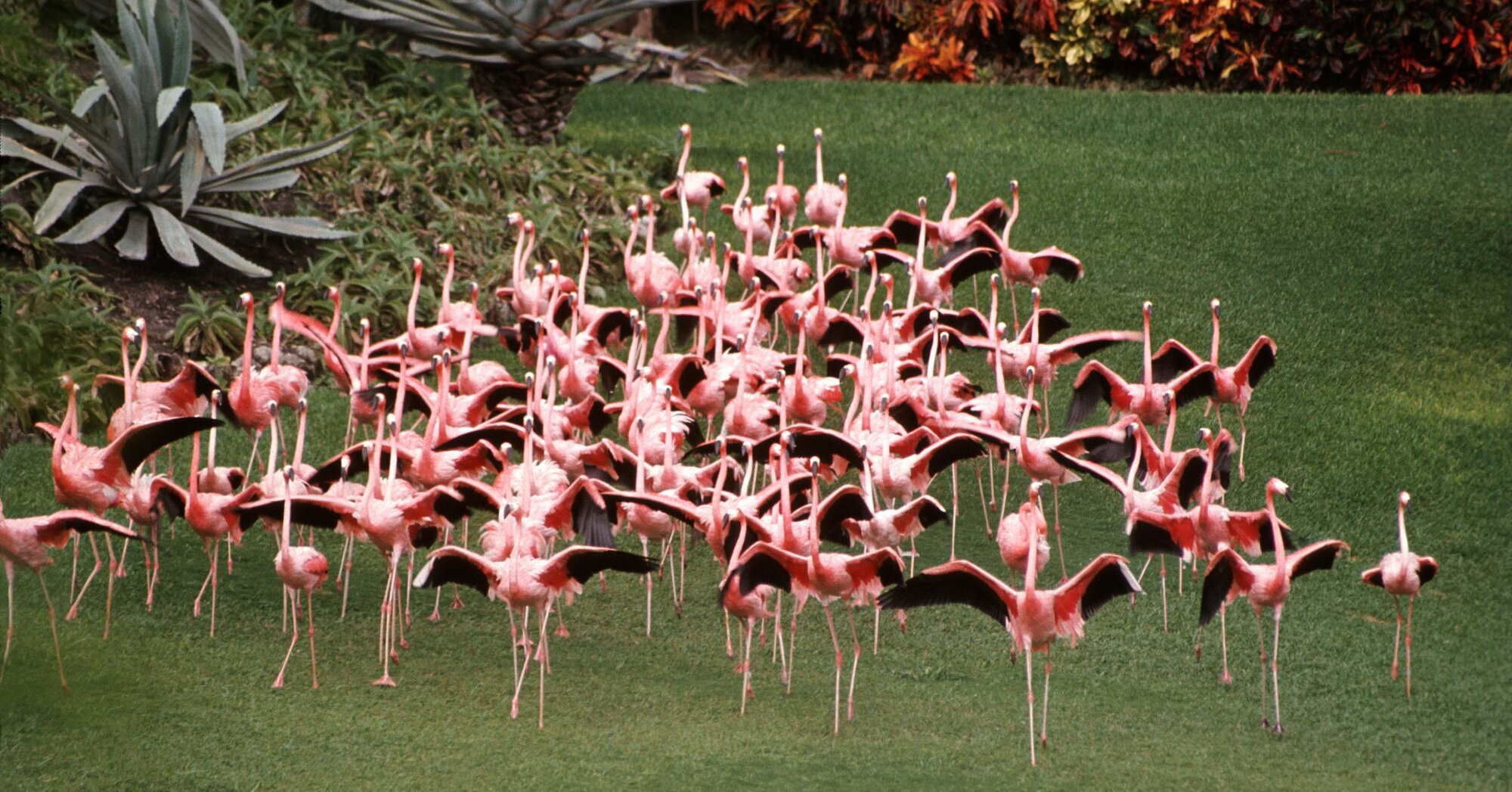 Here S How Florida Got Its Flamingos Southern Living