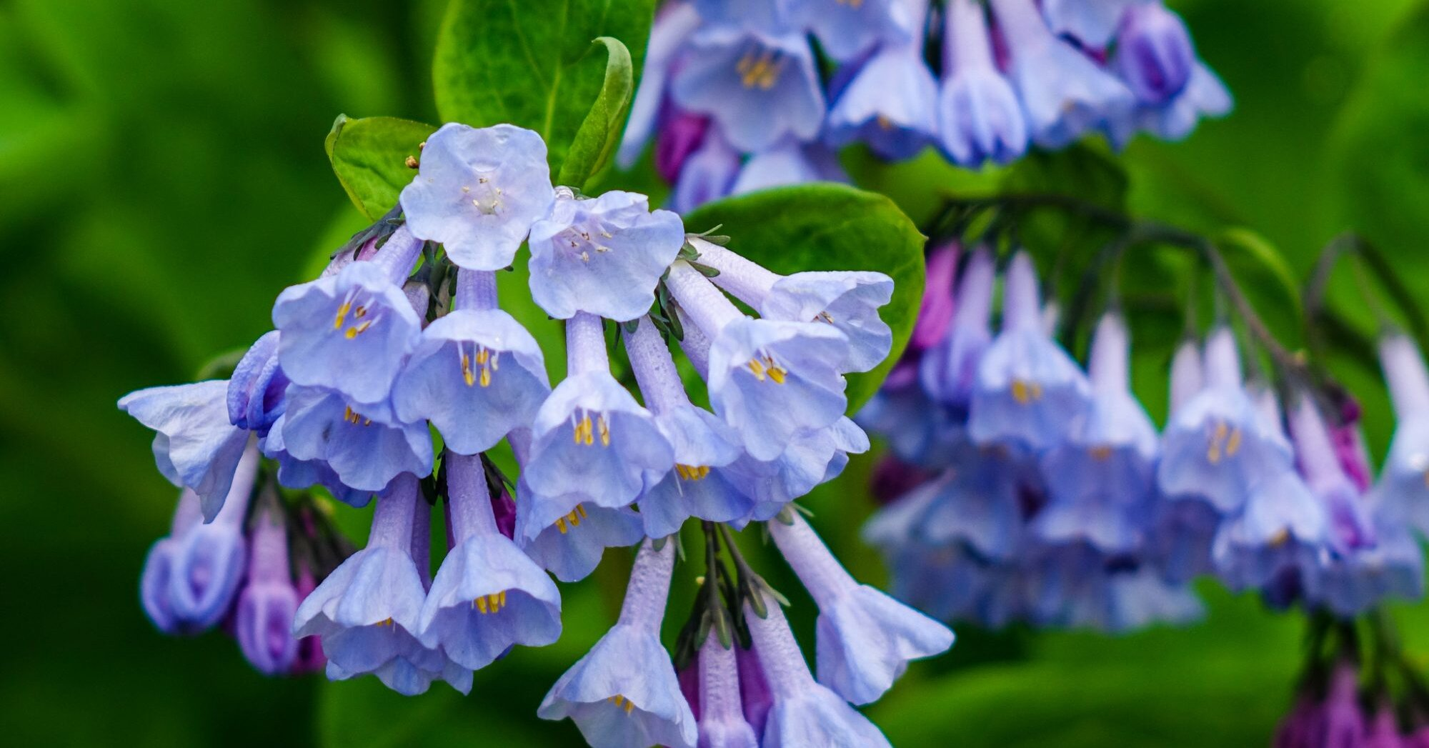 17 Breathtaking Blue Flowers For Your Garden Southern Living