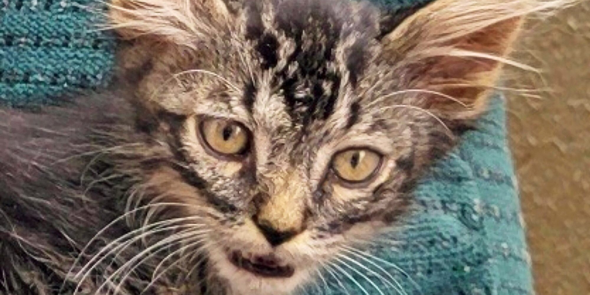 How a Dream Team Joined Forces to Save This Tiny Kitten From Being Flushed Away