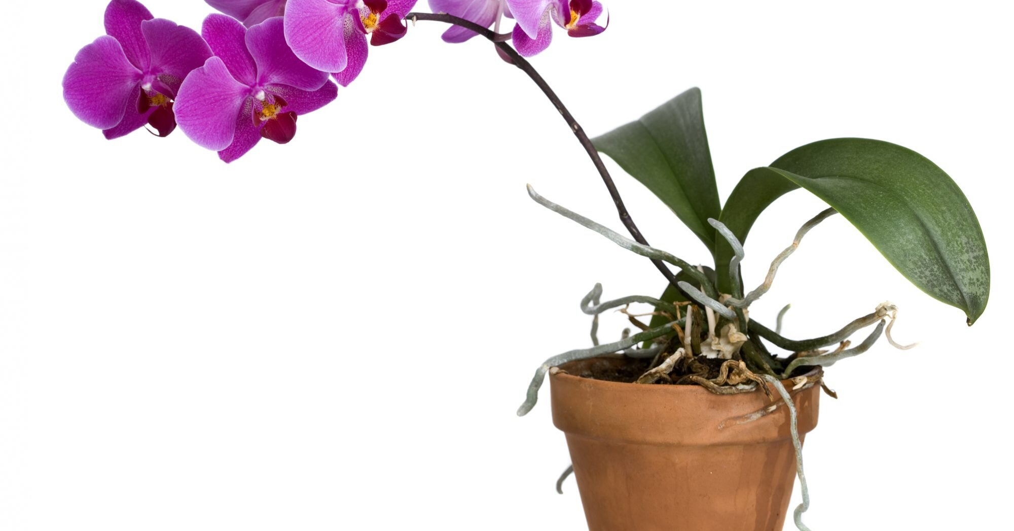 How To Repot An Orchid Southern Living
