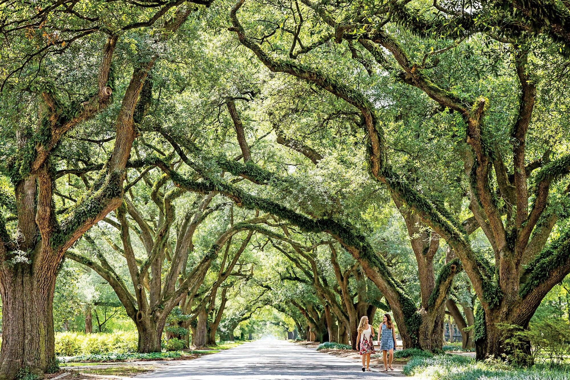 Aiken, South Carolina: A Horse-Country Town Rich in Tradition | Southern  Living