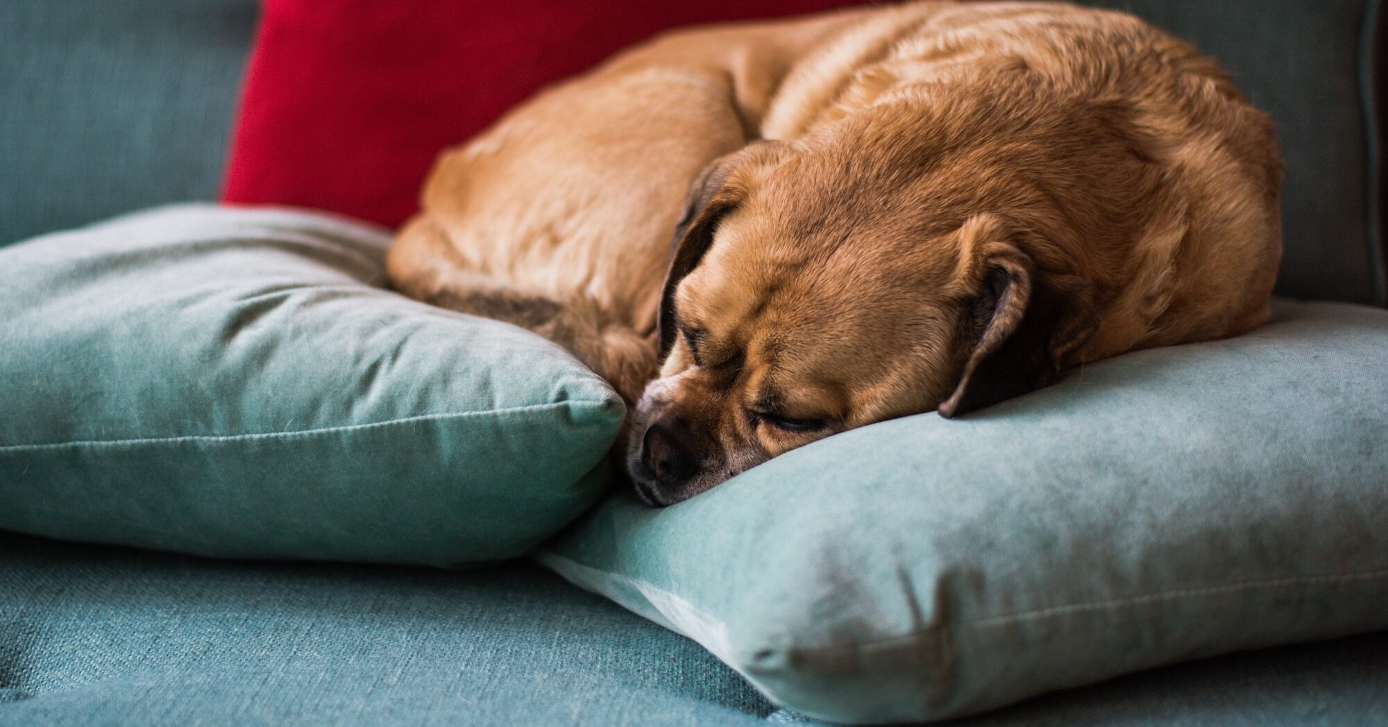 How Can I Help My Dog Re-Adjust to Spending Time Alone?