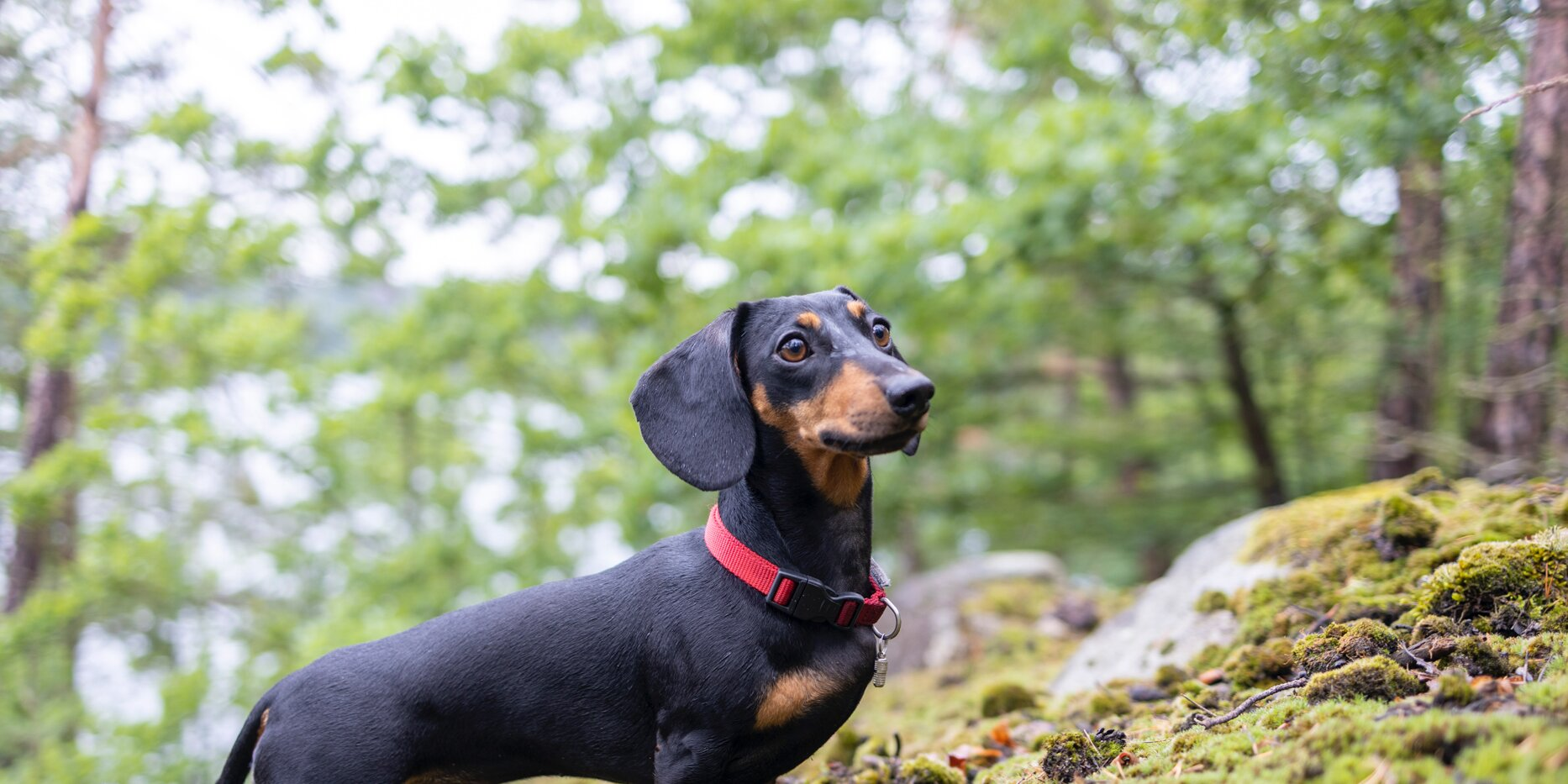 10 Dog Breeds That Chase Away Mice and Other Household Pests