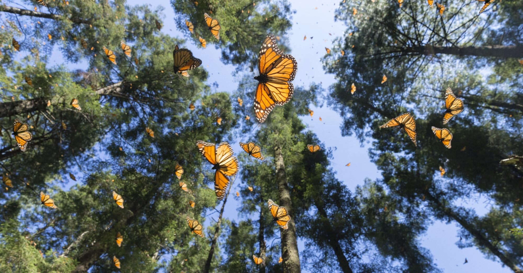 Seven of the Best Places to See Butterflies in the United States