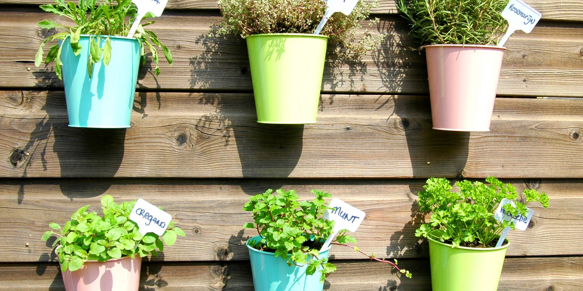 5 Herb Gardening Secrets Only the Pros Know