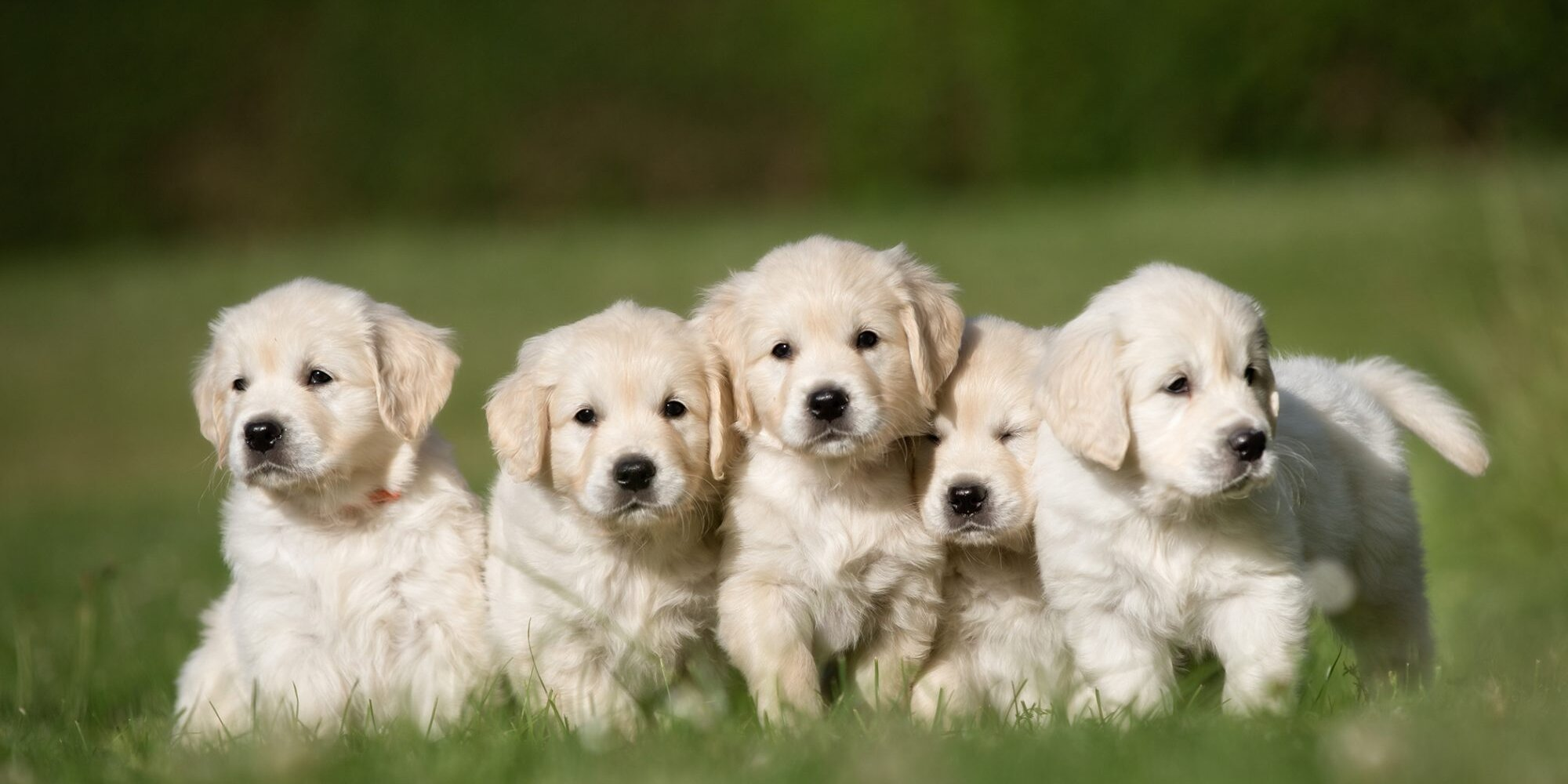 Trouble Naming Your Pandemic Puppy? These 14 Lists Can Help