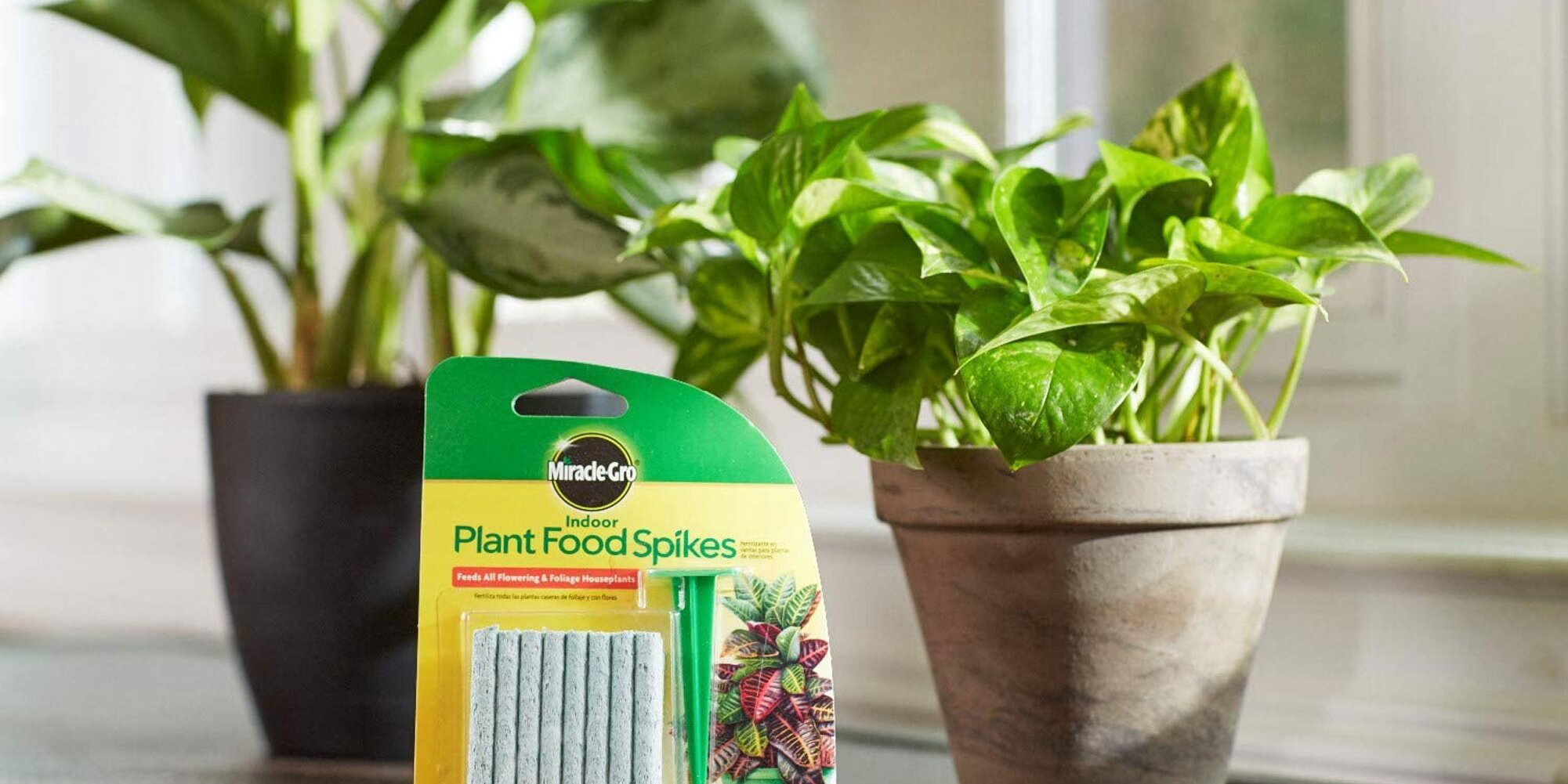 Even the Saddest Houseplants Can Be Saved With This $3 Hack