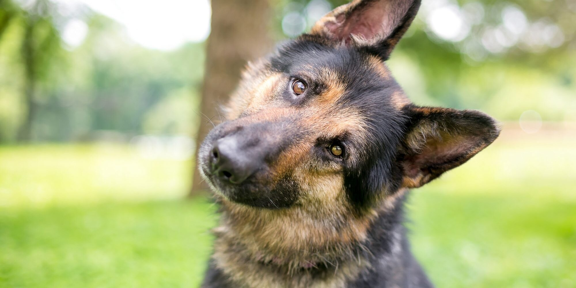 275+ of the Best German Shepherd Names for Your Canine Partner