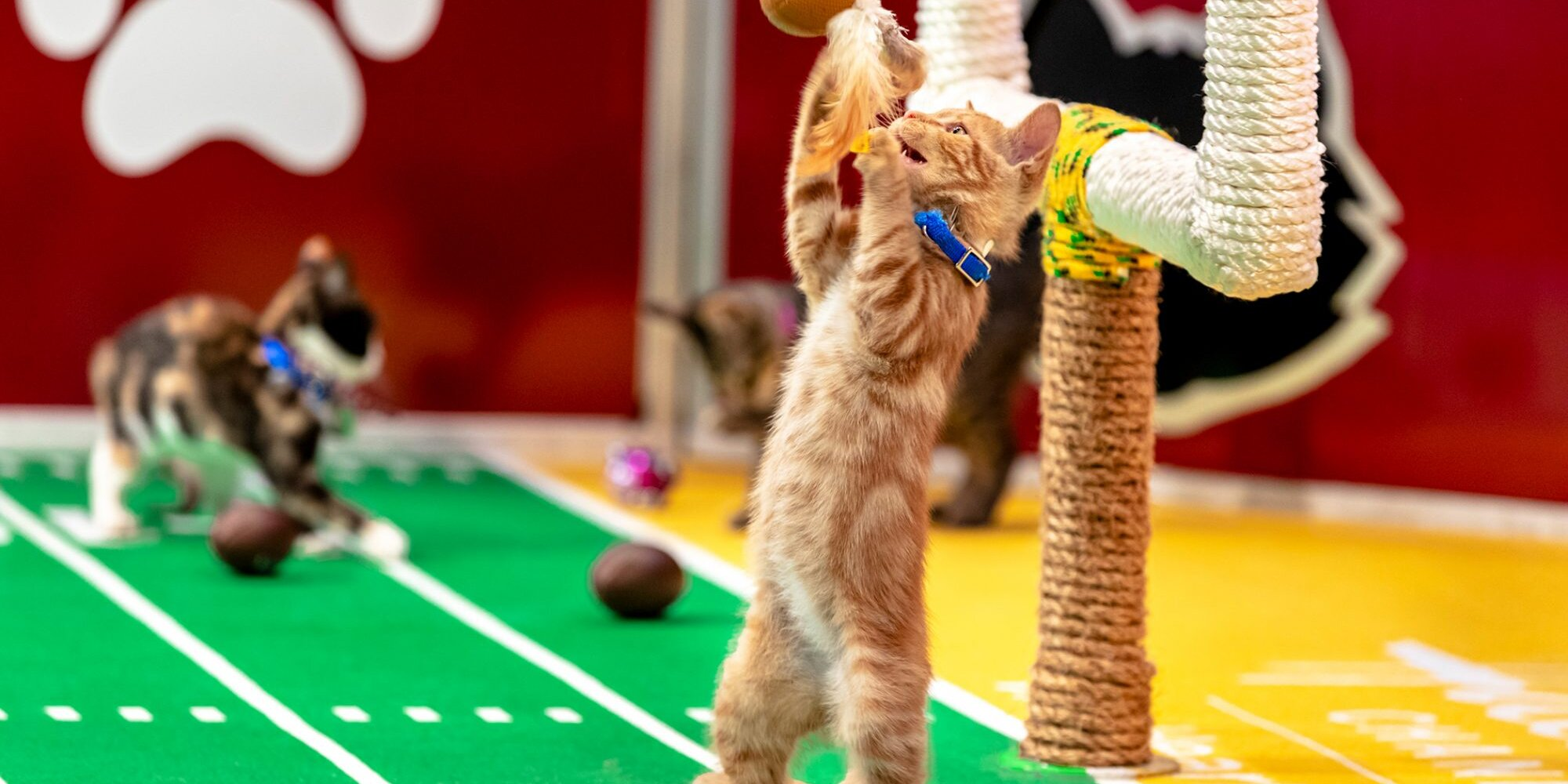 Kitten Bowl Is Back to Bring Even More Cuteness to Super Bowl Sunday 2021