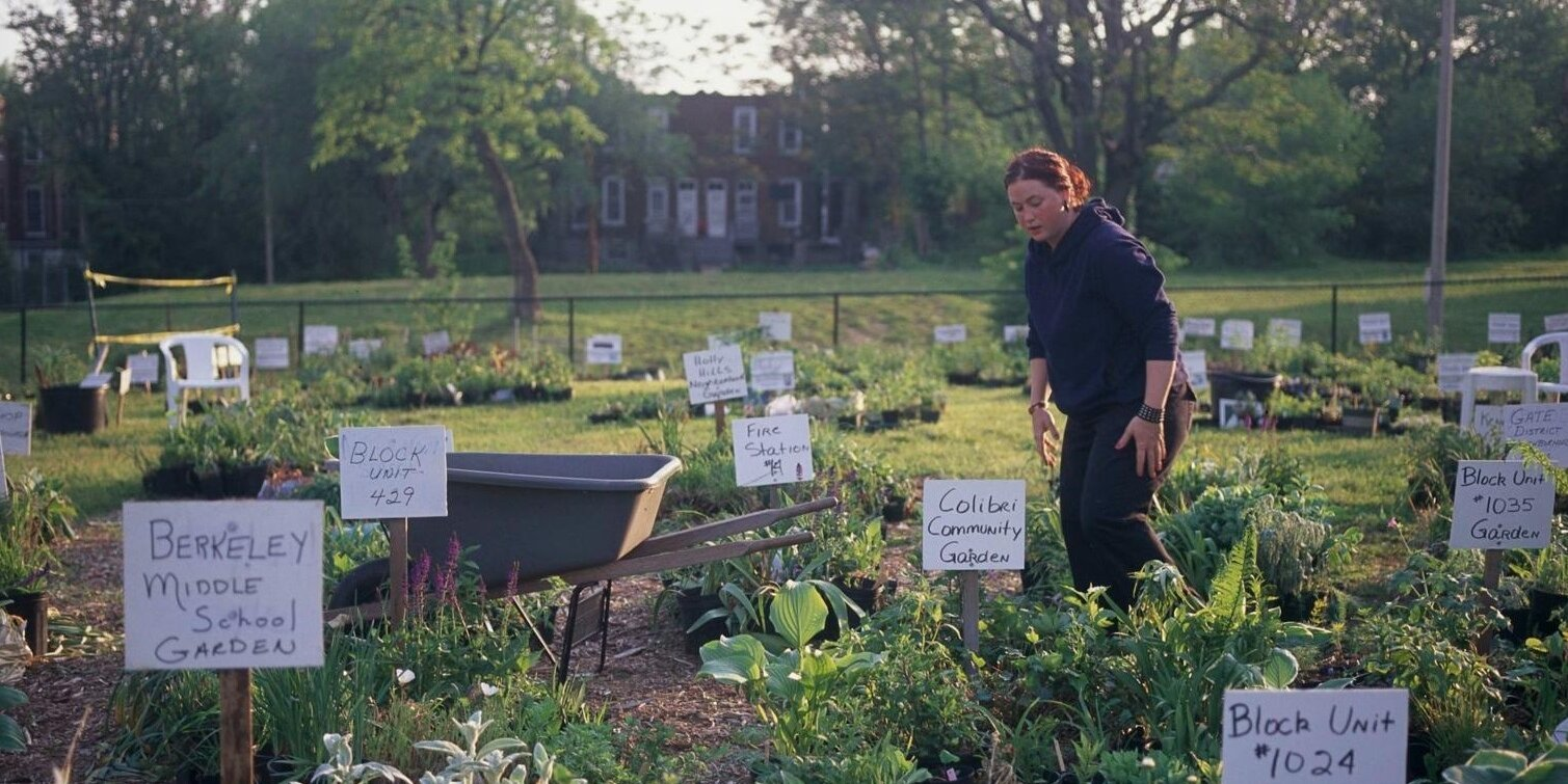 What Is a Community Garden (and Should You Join One)?