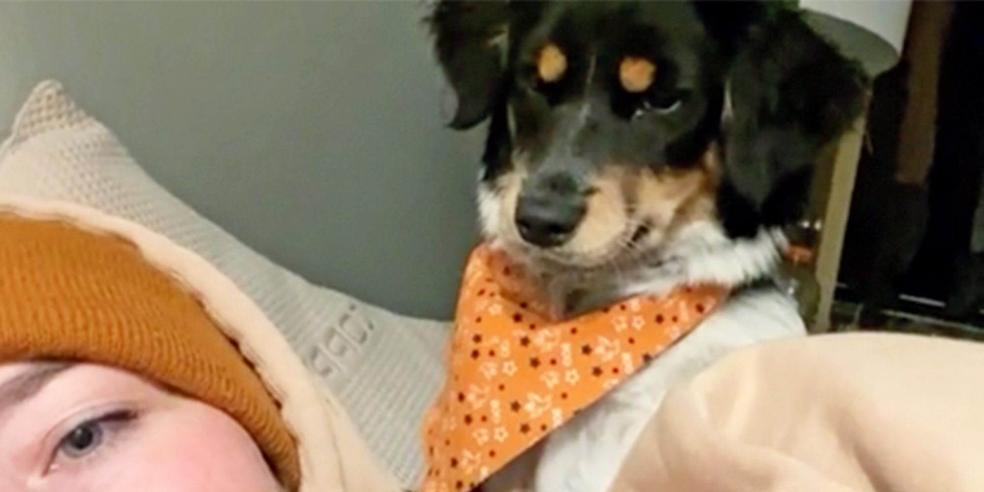 Watch This Dog's Sassy Reaction After Their Owner Ignores a Kiss in LOL-Worthy Video