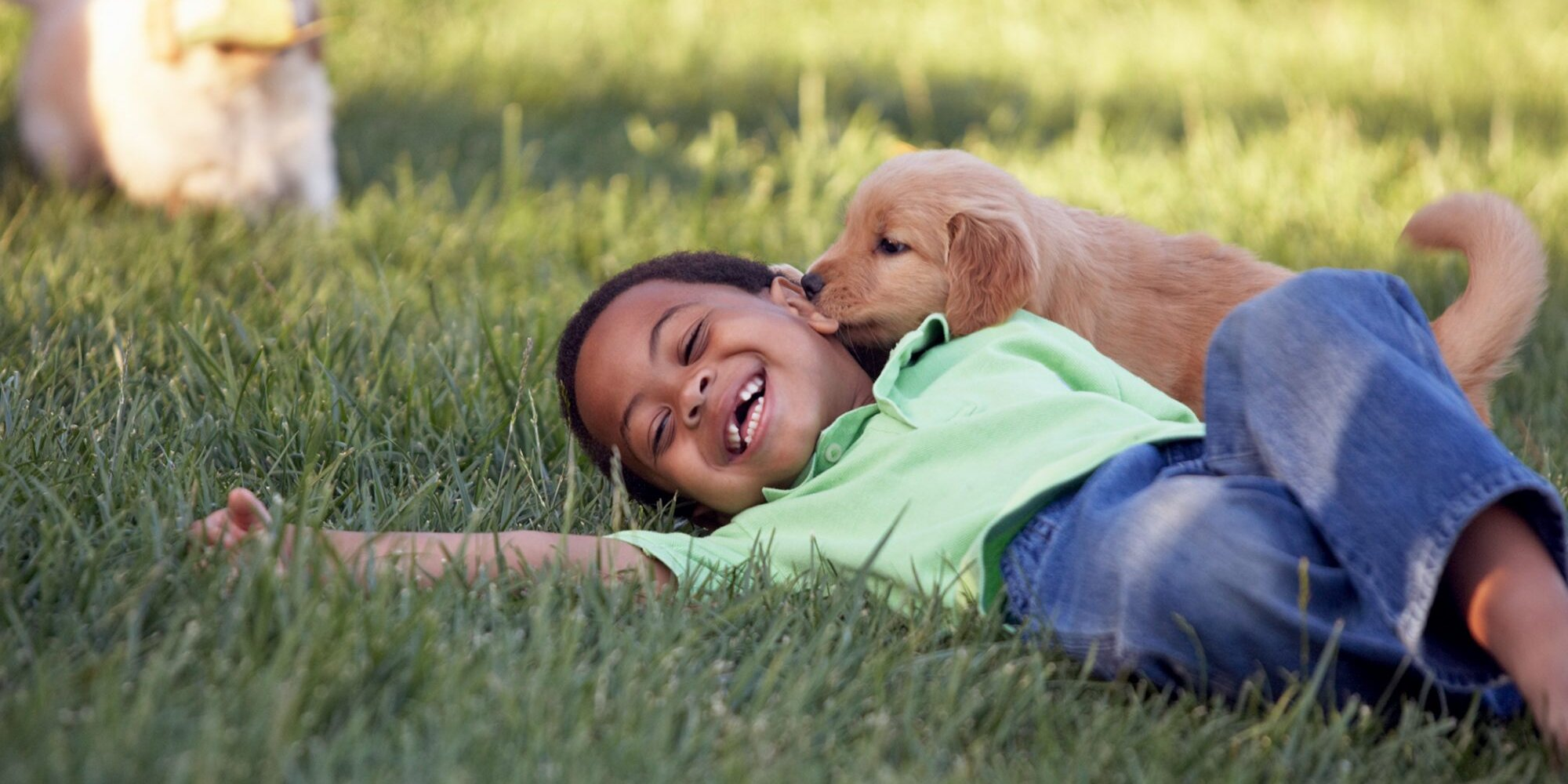 A New Study Suggests Puppies Are Born to Connect With Us