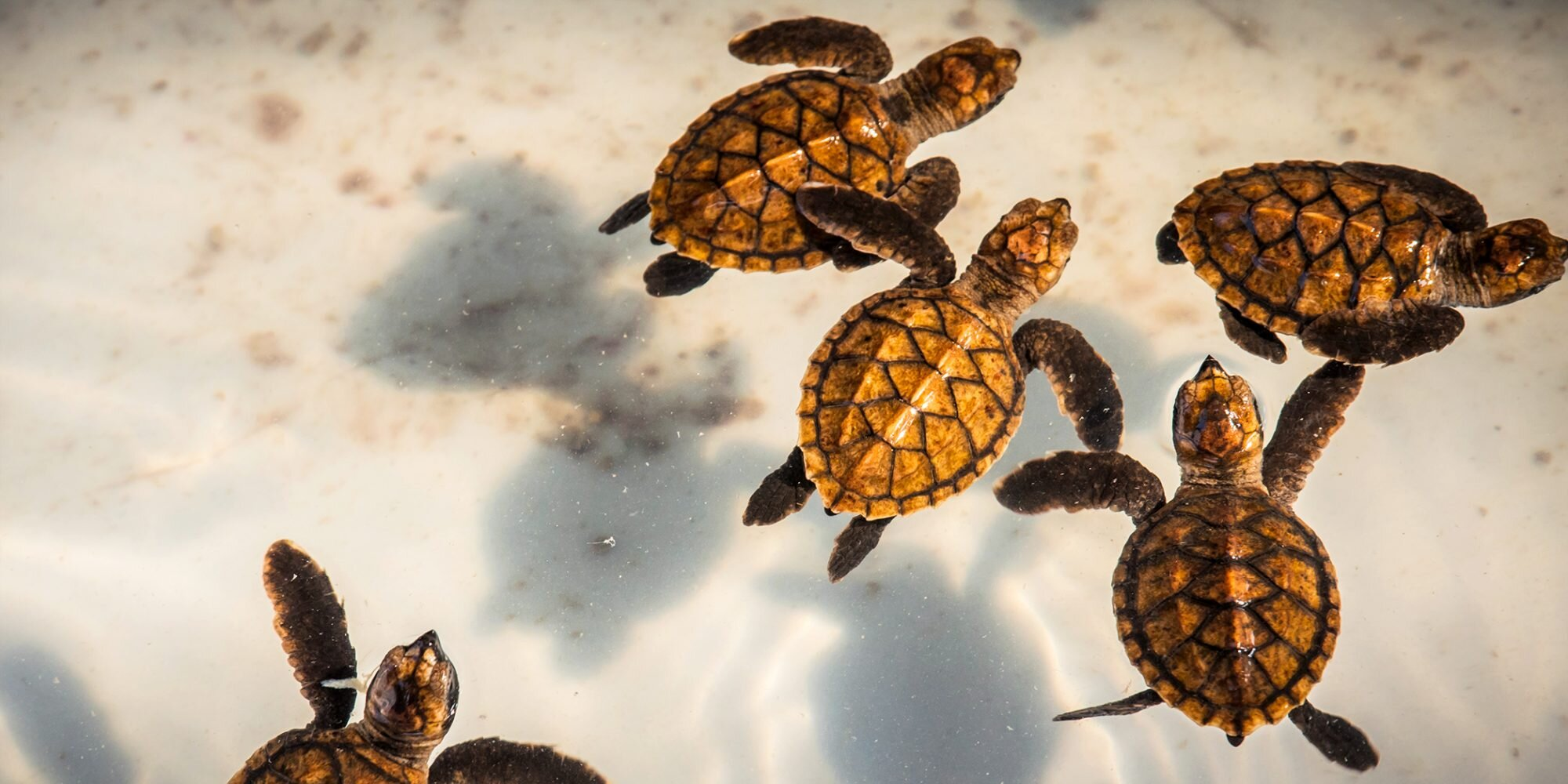 More Than 800 Baby Turtles Rescued from Drains Near New Jersey's Shore