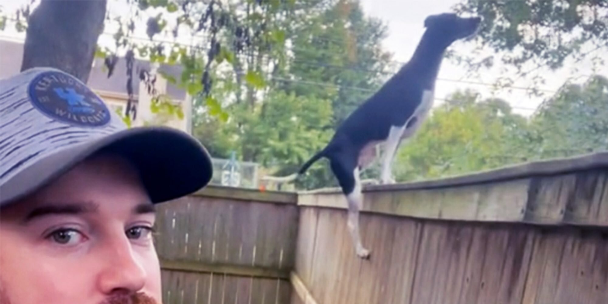 Watch This Incredibly Spry Dog Scale Her Huge Backyard Fence Like It's Nothing in Amazing TikTok
