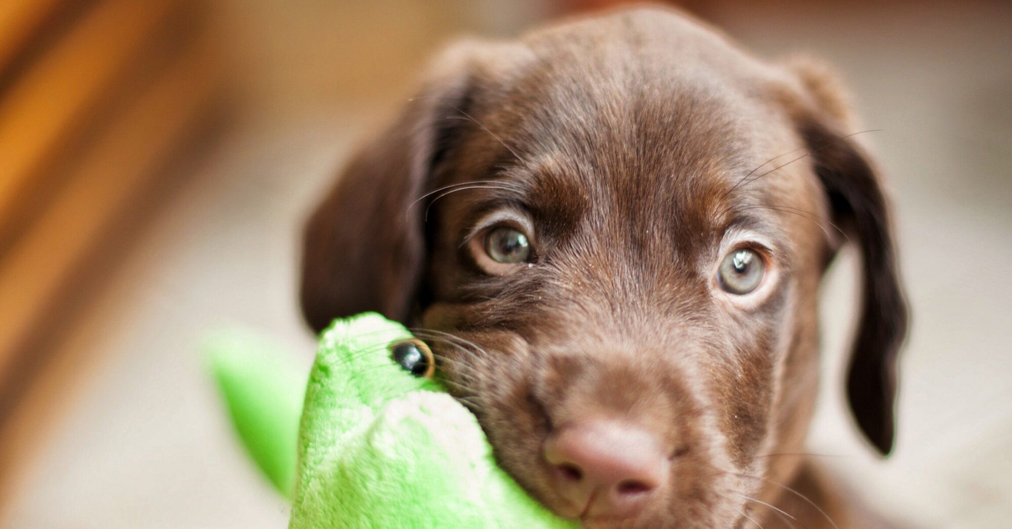 120 of the Ultimutt Brown Dog Names for Your Chocolate-Colored Pup