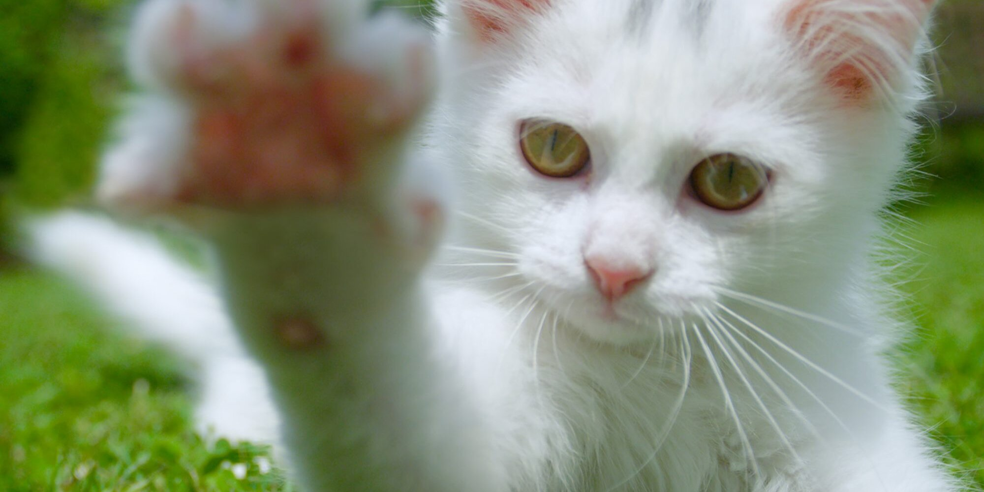 3 Simple Steps to Teach Your Cat Sign Language