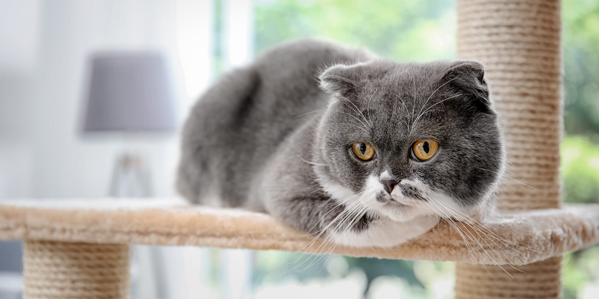 What to Know Before You Build a DIY Cat Tree | Daily Paws
