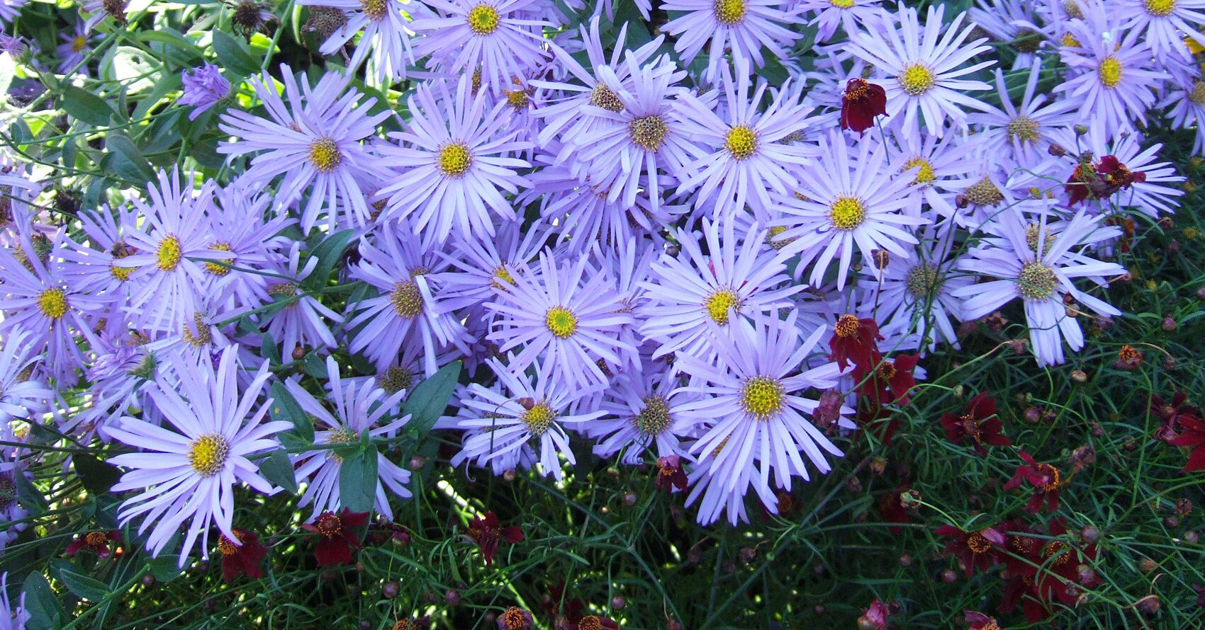 8 Fall-Blooming Native Plants You'll Love for Adding Late-Season Color to Your Garden