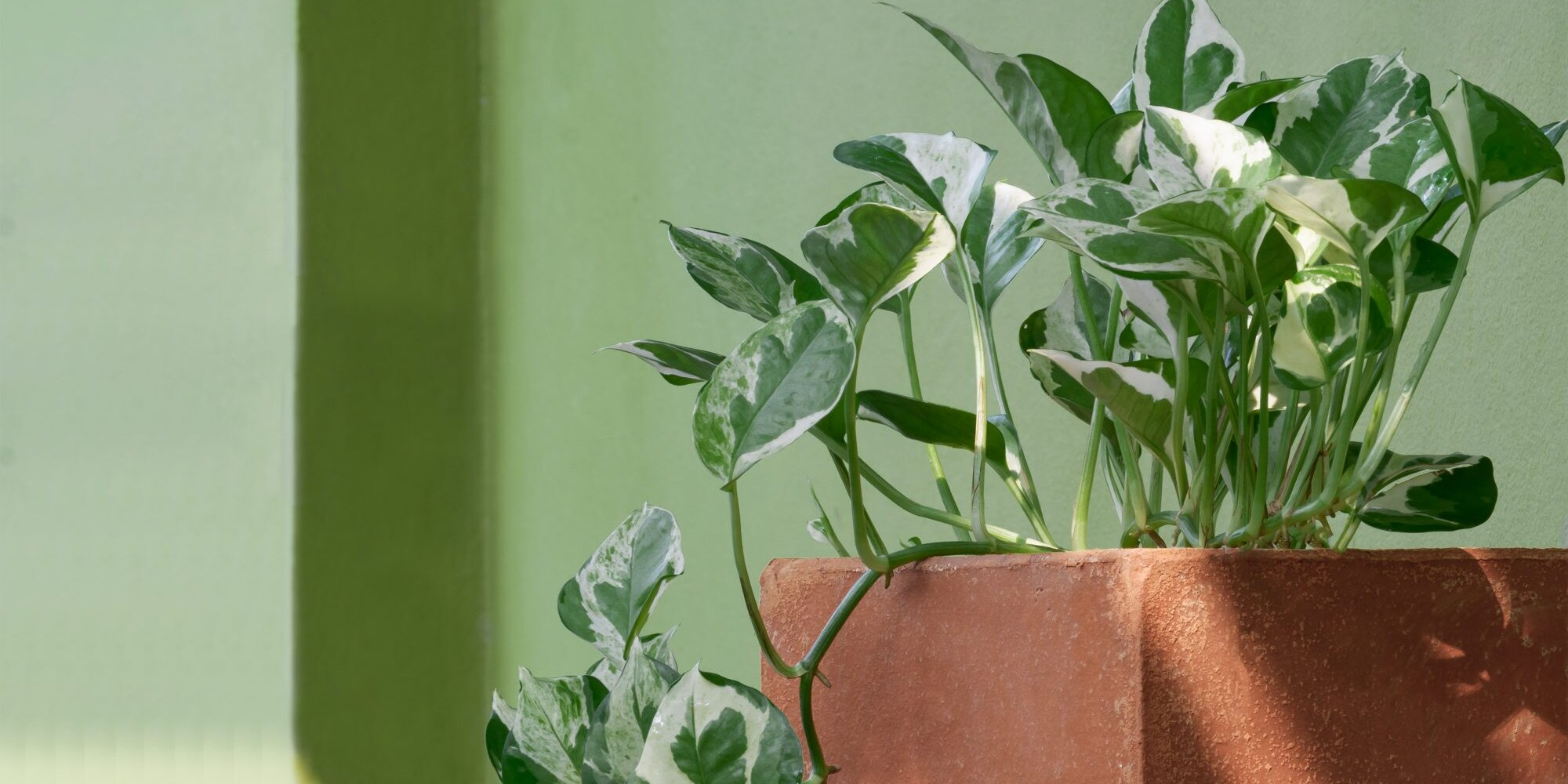 9 Pretty Pothos Plants That Are (Almost) Impossible to Kill