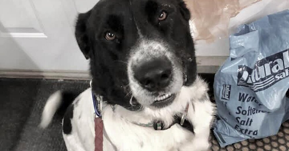 Iowa Dog Finally Adopted After 900 Days at Shelter Helps New Owner Recover from Breakup