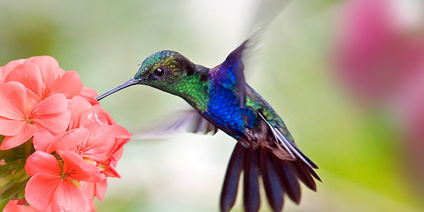 Attract Hummingbirds to Your Yard with This Easy-to-Grow Vertical Flower Garden