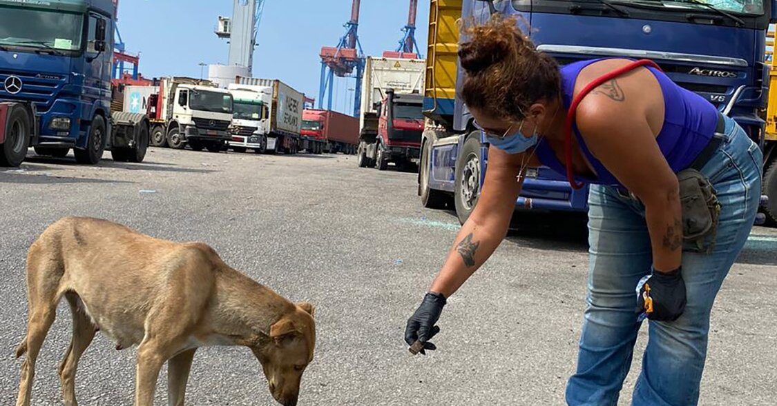 Beirut-Based Animal Rescue Group Works to Help Countless Pets Affected by City's Explosion